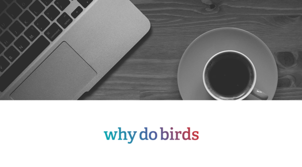 why do birds: Client Service Director